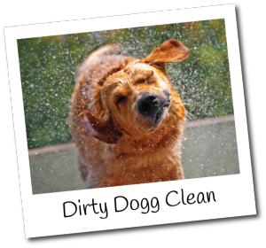 dirty-dog-clean